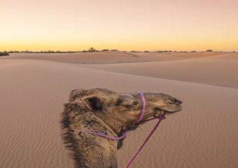 Ruta 4 dias Fes Alto Atlas Desierto
