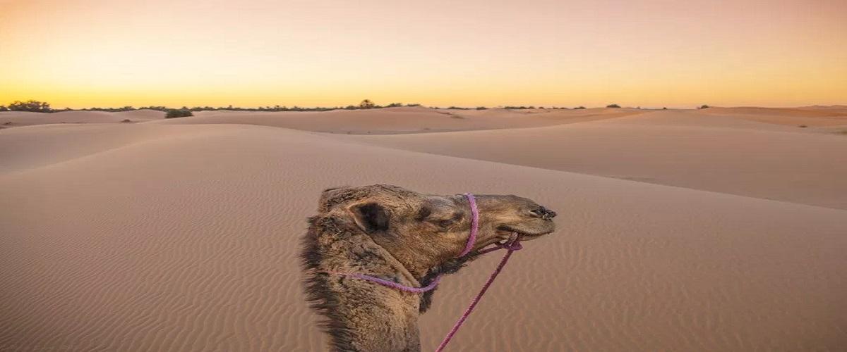 4 Days Trip Fes Desert Merzouga Fes