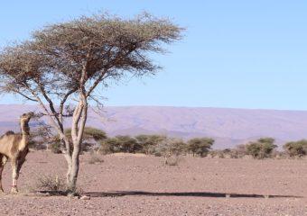 Ruta 6 dias Marrakech Alto Atlas Las Gargantas Desierto Merzouga